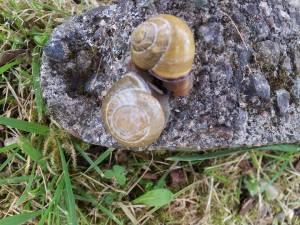 Snail porn